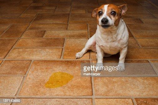 Dog Pee Spot : Stock Photo