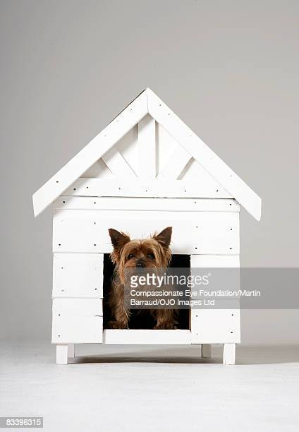 Dog peeking his head out of the dog house