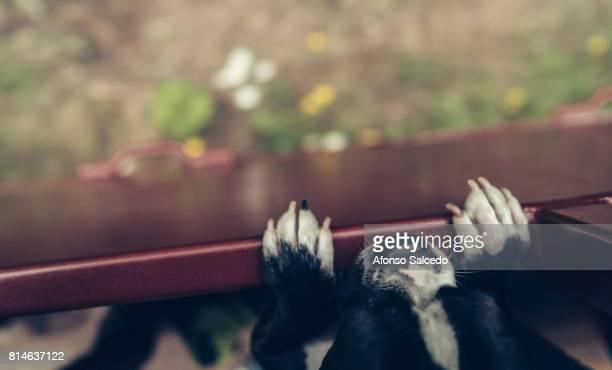 A Dog Peeks Over A Train