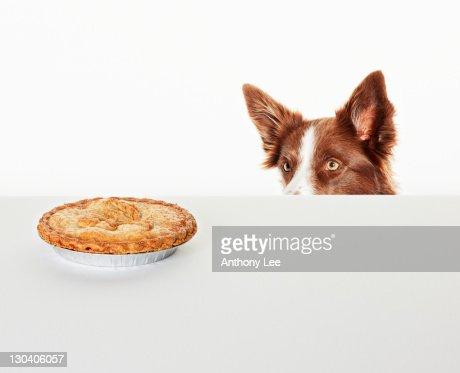 Dog peering at pie on kitchen counter : Stock Photo