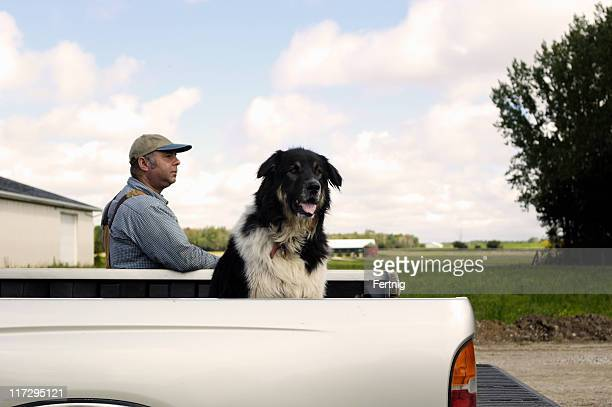 Dog, pick-up, farmer in afternoon light