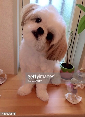 Dog : Stock Photo