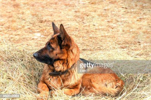 Cão : Foto de stock