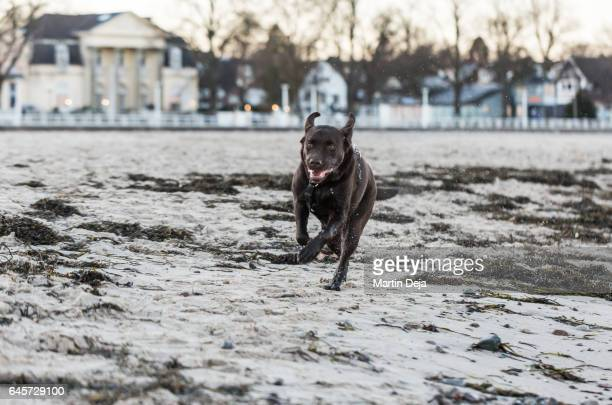 Dog playing at the Beach