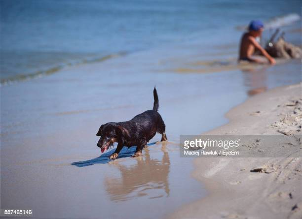 Dog Playing On Wet Sand At Beach