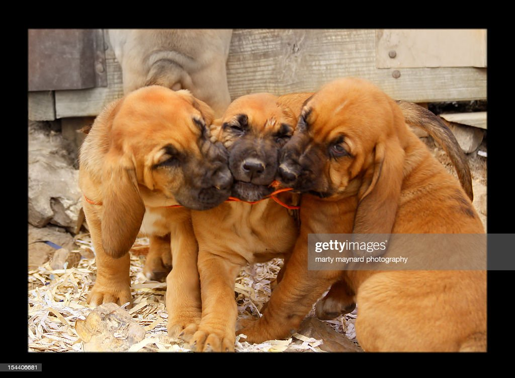 Dog playing with twine : Stock Photo