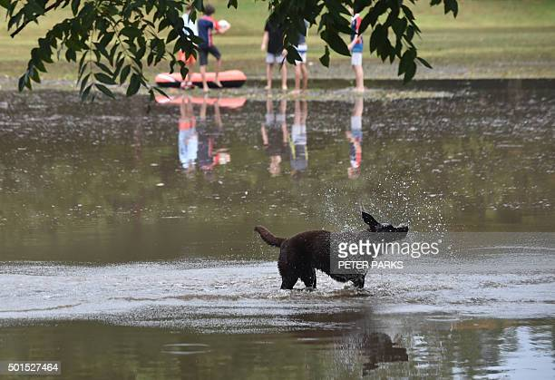 A dog plays in a flooded park after a storm in the eastern suburbs of Sydney on December 16 2015 Sydney was smashed by a tornadolike storm with hail...
