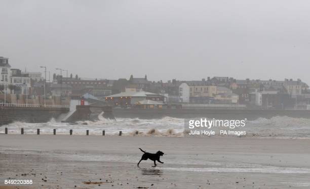 A dog plays in the wind and rain on South Beach in Bridlington East Yorkshire