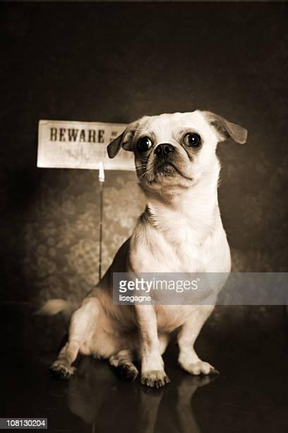 Hund portrait, Sepia