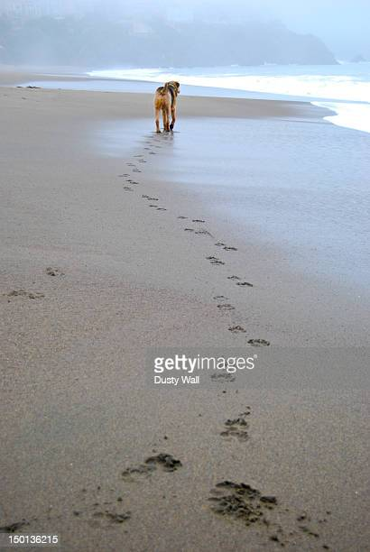 Dog prints in sand, Baker Beach
