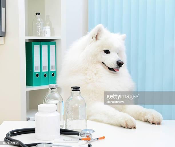 dog Professor