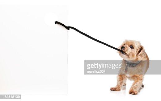 Dog Pulling Sign