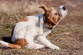 Cute furry pet dog puppy scratching in the grass