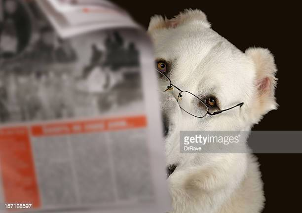 Dog reading newspaper with glasses