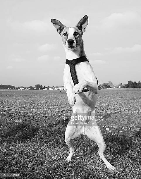 Dog Rearing Up On Grassy Field Against Sky