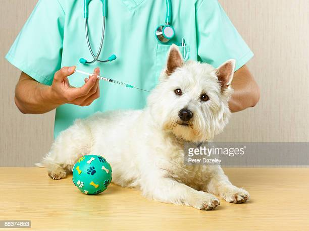 Dog receiving vaccination from vet.