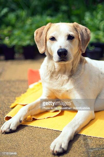 Dog relaxing in summer garden