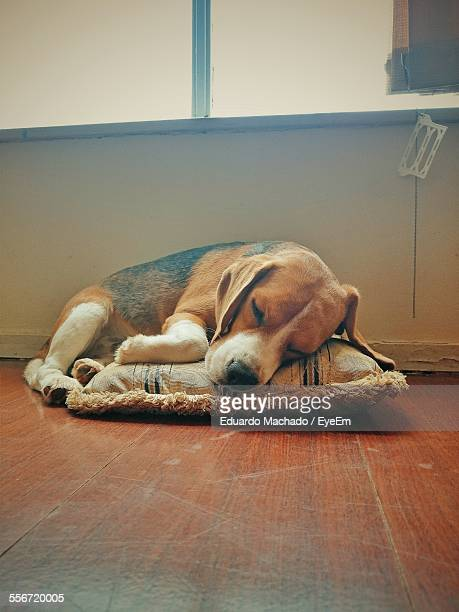 Dog Relaxing On Pillow