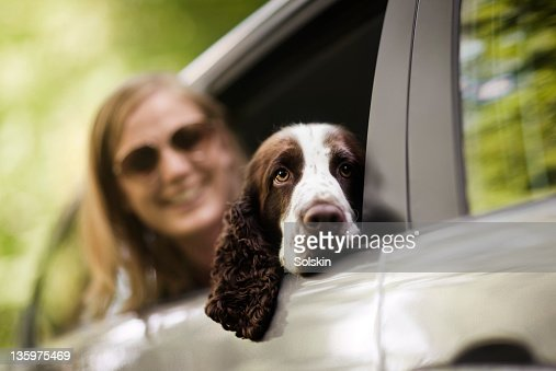 Dog resting head in open car window : Stock Photo