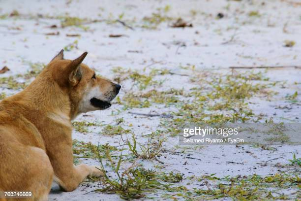Dog Resting On Snow Covered Field