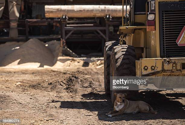 A dog rests in the shade in front of a wood loading vehicle at the Spotted Owl Timber Inc mill in Santa Fe New Mexico US on Monday Aug 15 2016...