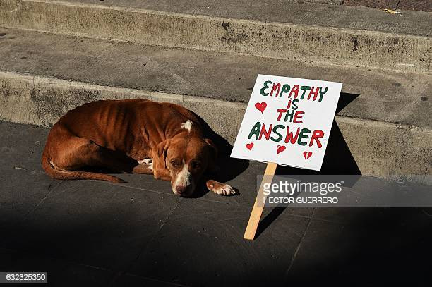 A dog rests next to a sign during the 'Women's March' in Ajijic a city with a large community of US and Canandian nationals mainly retired Jalisco...