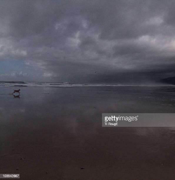 A dog running at beach