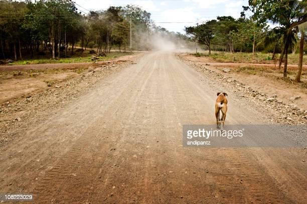 Cane in esecuzione giù rurale Strada in terra battuta in Costa Rica