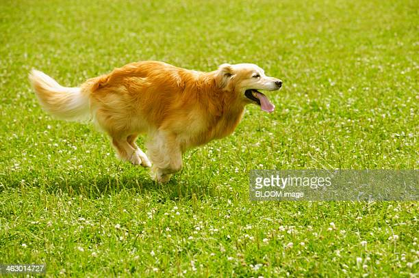 Dog Running In Meadow
