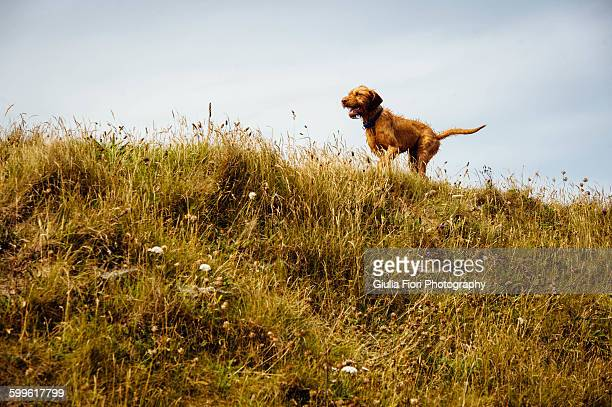 Dog running in the countryside