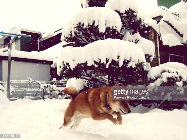 Dog Running On Snow Covered Field By Trees