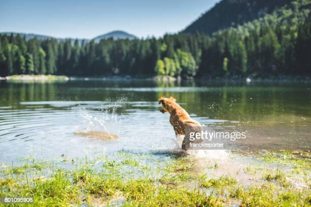 dog running on the lake