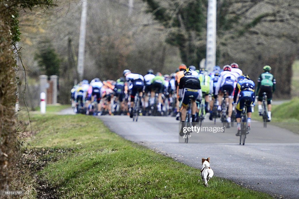 A dog runs after the pack during the second stage of the 71st Paris-Nice cycling race between Vimory and Cerilly, on March 5, 2013. AFP PHOTO / JEFF PACHOUD