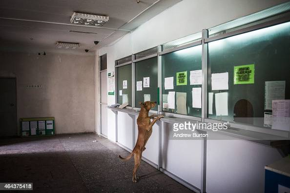 A dog runs around a bank while civilians receive a one time cash donation from Russian backed rebels on February 25 2015 in Debaltseve Ukraine After...