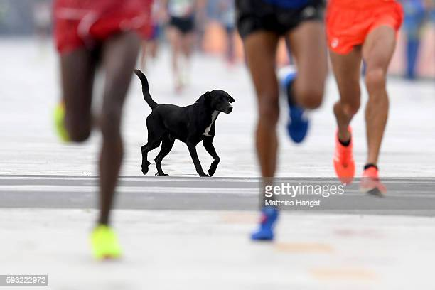 A dog runs on the course as Abdi Hakin Ulad of Denmark Anuradha Indrajith Cooray of Sri Lanka and Suehiro Ishikawa of Japan approach the finish line...