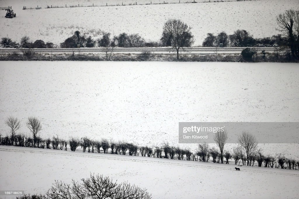 A dog runs through a field near Box Hill on January 19, 2013 in Dorking, United Kingdom. Heavy snow around the UK caused hundreds of flight cancelations at Heathrow, with more travel disruptions expected during a snowy weekend. Approximately 3,000 schools were closed in England, Wales and Scotland.