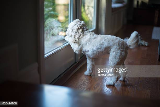 Dog scratching with paw to go outside