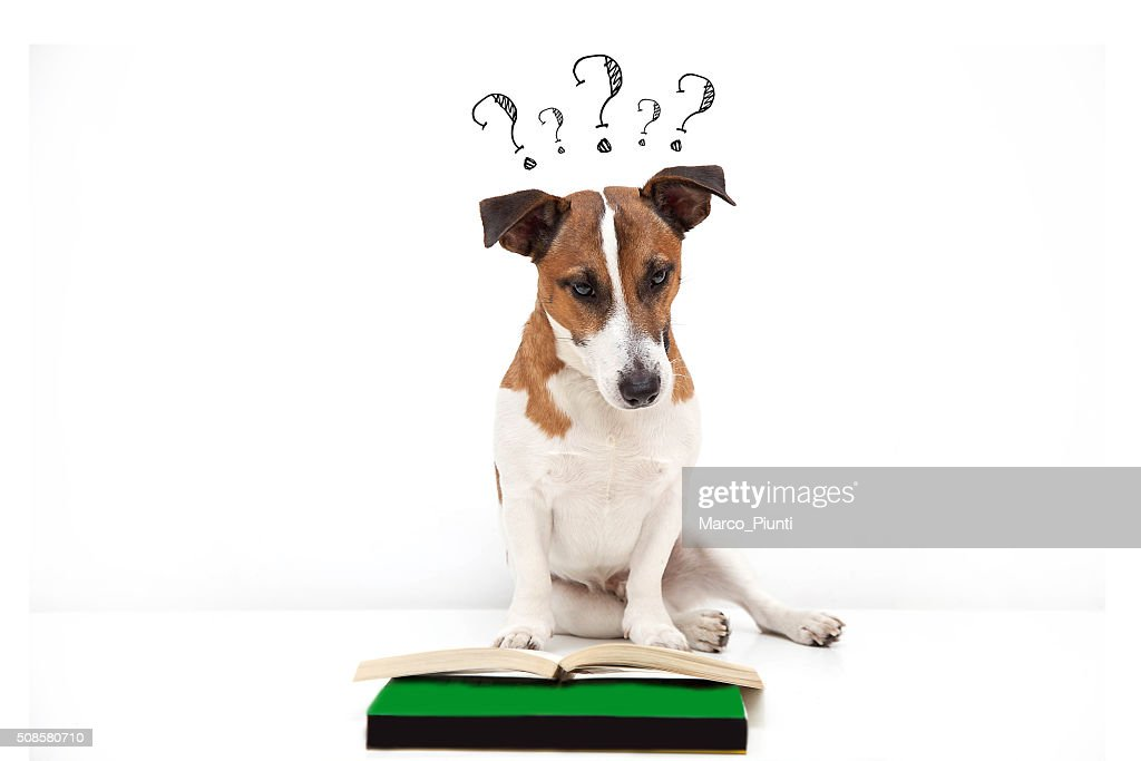Dog Searching for answers : Stock Photo