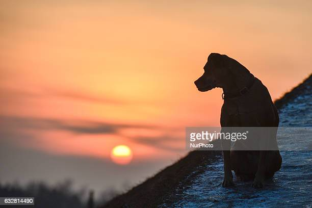 A dog seats on the path to Krakus Mound in Podgorze area during a smog alert on 26 January as the air pollution in Poland still continues to be very...