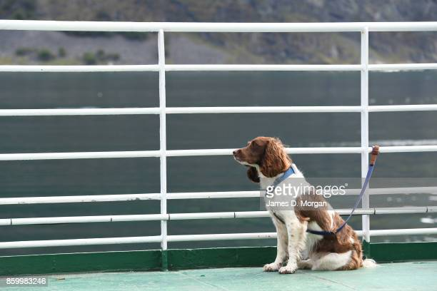 A dog seen sitting on the deck of a boat staring towards the water on February 8th 2017 in Norway