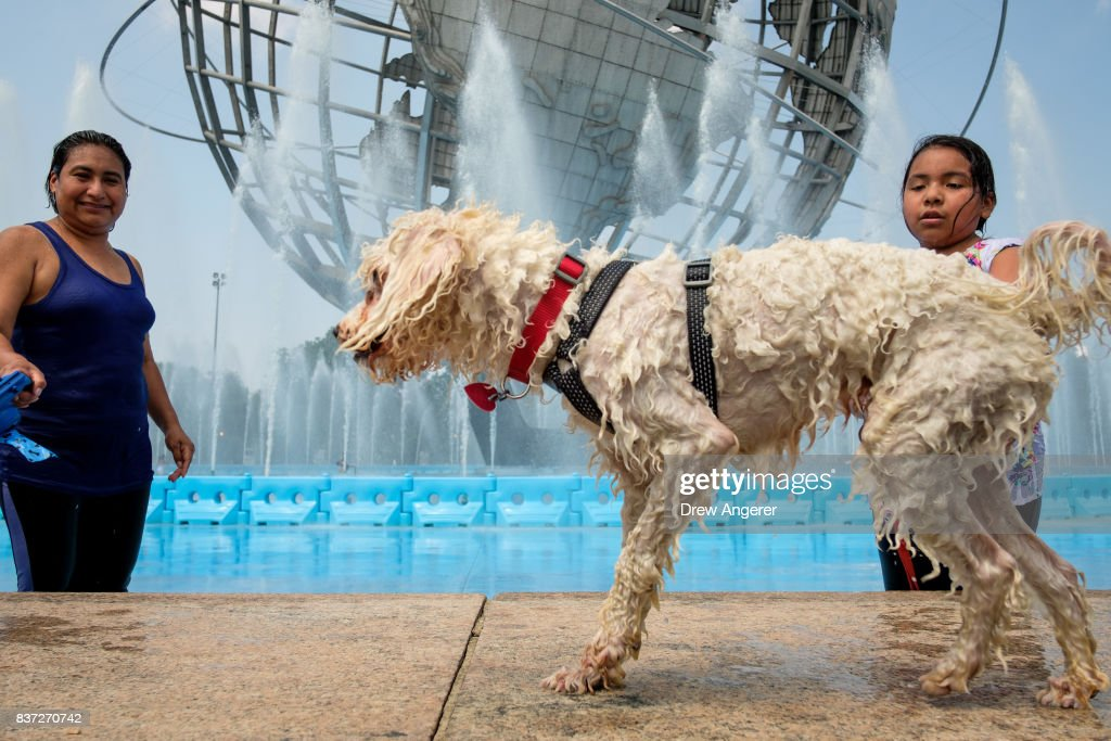 A dog shakes off the water from his coat as he cools off after running through the fountains at Flushing Meadows-Corona Park, August 22, 2017 in the Queens borough of New York City. With heat index values near 100, the New York City area is under a heat advisory on Tuesday.