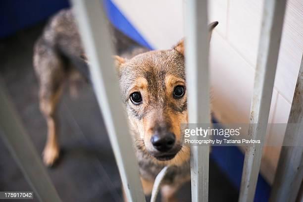 Dog shelter
