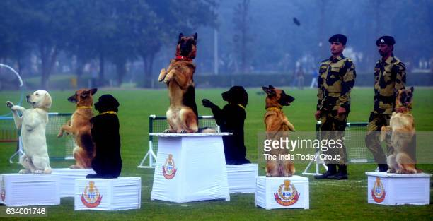 Dog Show and Canine Show by BSF at Jaipur Polo Ground in New Delhi