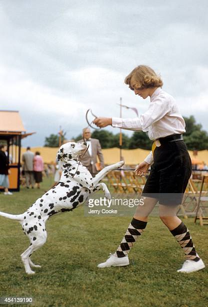 Morris and Essex Kennel Club Show Juno owned by Mrs Charles Mapes jumps to her owner's 16yearold daughter Judy after showing at Giralda Farms Madison...