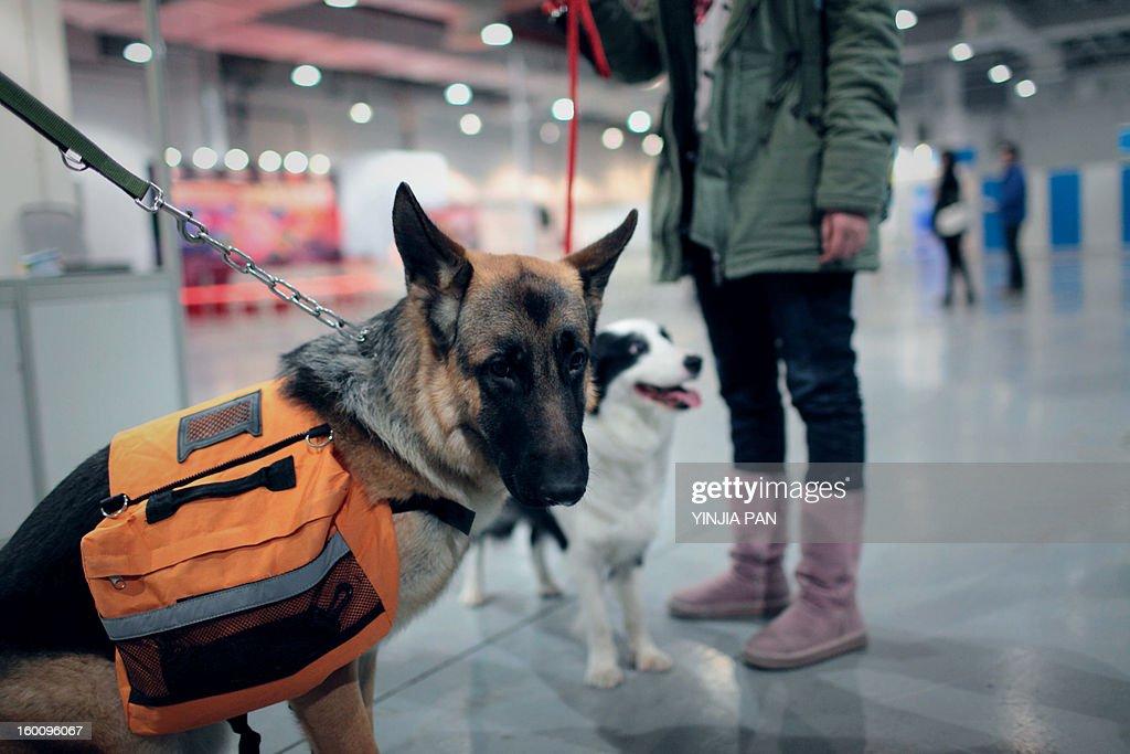 Dog Show : Stock Photo