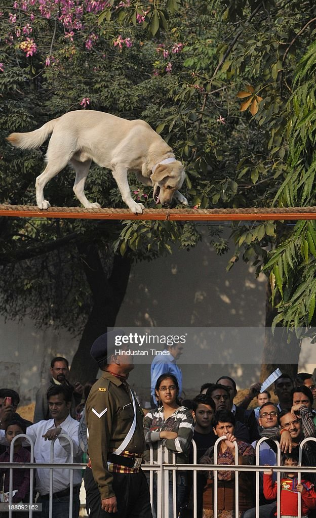 A dog showing their skills as they were trained by the Army men at the Defense Pavilion at the India International Trade Fair at Pragati Maidan on November 15, 2013 in New Delhi, India. About 6,000 exhibitors including 250 from foreign countries are participating in the 33rd edition of IITF. While Japan is a partner country, South Africa will be the focus country.