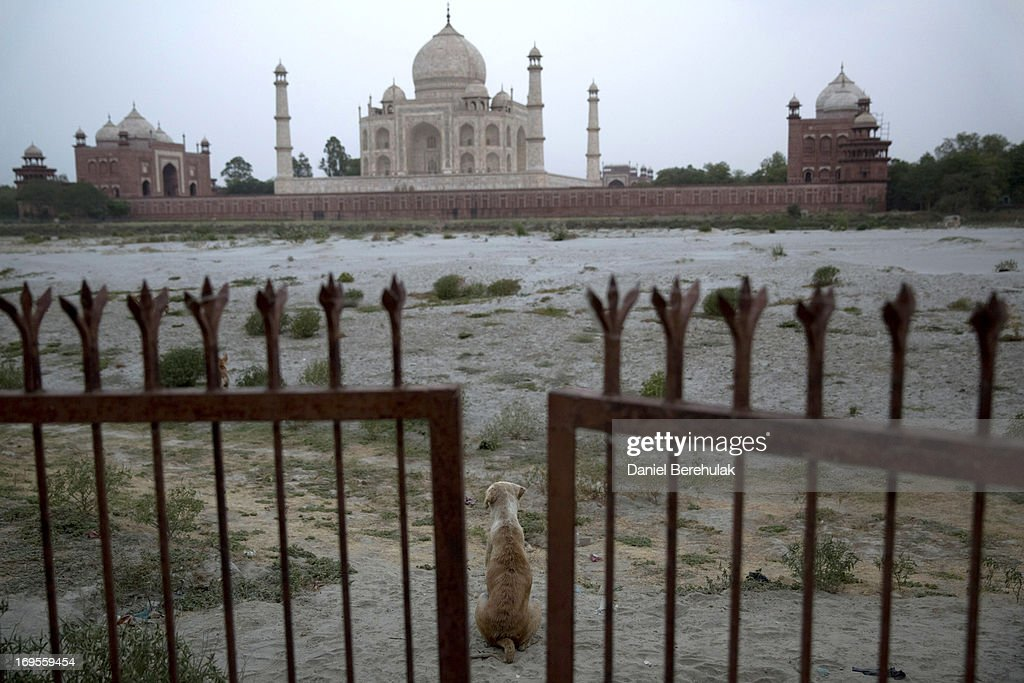 A dog sits beyond a gate prohibiting access to the Yamuna river in front of the Taj Mahal on May 27, 2013 in Agra, India. Completed in 1643, the mausoleum was built by the Mughal emperor Shah Jahan in memory of his third wife, Mumtaz Mahal, who is buried there alongside Jahan.