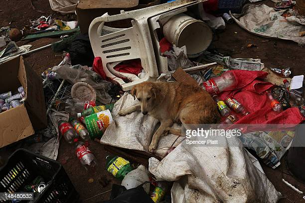 A dog sits in a pile of garbage in a gang infested neighborhood on July 17 2012 in Tegucigalpa Honduras Honduras now has the highest per capita...