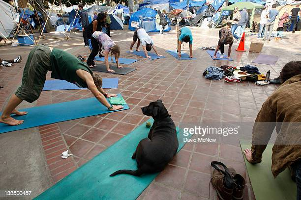 A dog sits in during a yoga session at the Occupy Los Angeles encampment at City Hall on November 19 2011 in Los Angeles California Though Occupy...