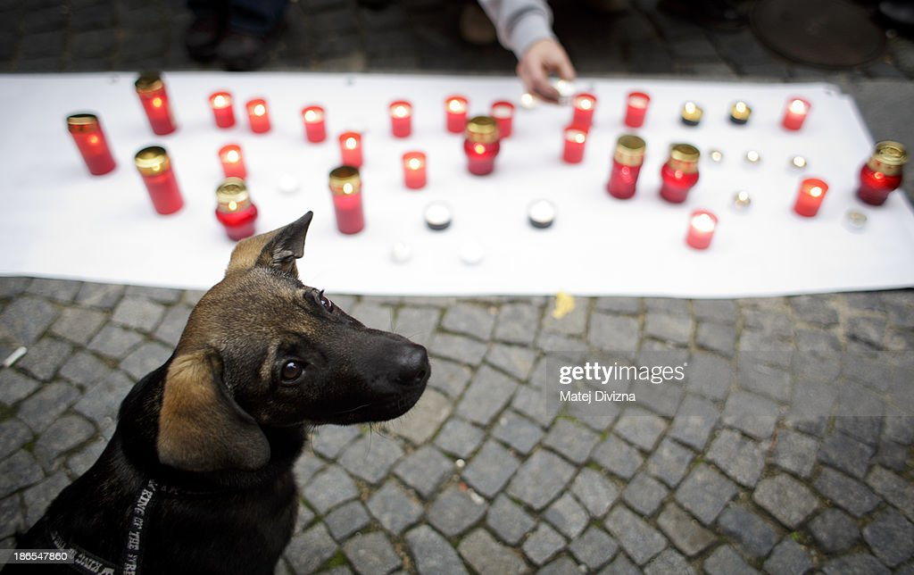 A dog sits next to candles during an animal rights activists' protest in the All Saints' Day on November 1, 2013 in Prague, Czech Republic. Activists were protesting against the Romania law for stray dog culling approved by Romania's constitutional court in September this year. According to estimates 65,000 stray dogs live on the streets of Bucharest.